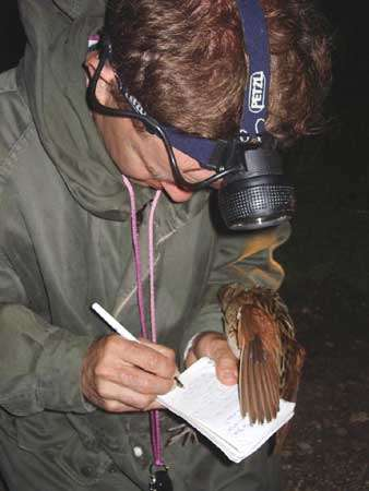 Suivi scientifique du Râle des genêts © LPO Anjou