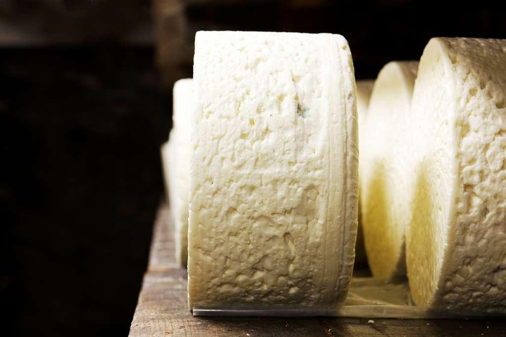 Une meule de Roquefort de 2,8 kg contient 12 litres de lait cru. © Frédéric Prochasson, Fotolia