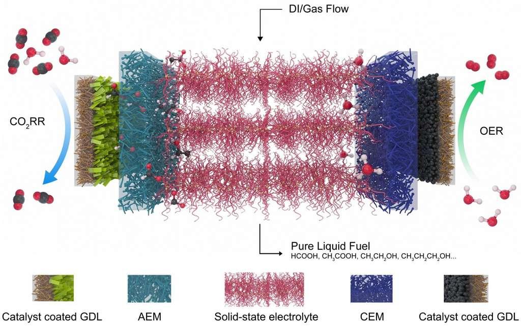 este esquema Mostra o eletrólis desenvolvido na Universidade de Rice (Estados Unidos) para reduzir o dióxido de carbono (CO2), um gás de efeito estufa, em combustíveis de valor. À esquerda, um catalisador que seleciona dióxido de carbono e reduz os formatos carregados negativamente, que são conduzidos por uma camada de difusão de gás (GDL) e uma membrana de troca de aniões (AEM) para o eletrólito central (em vermelho). À direita, um catalisador de reação de liberação de oxigênio (OER) gera prótons positivos da água e os envia através da membrana de troca de catologia (EMC). O ácido fórmico de recombina iões ou outros produtos extraídos do sistema com água desionizada (DI) e gás. © Chuan Xia e Demin Liu, Universidade de arroz