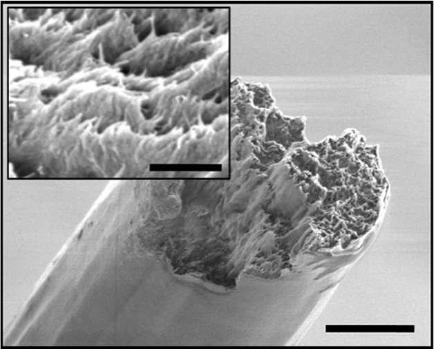 Cette image en microscopie électronique à balayage montre les nanofibres de cellulose alignées à l'image de ce qui peut se produire dans la nature. © Daniel Söderberg, KTH