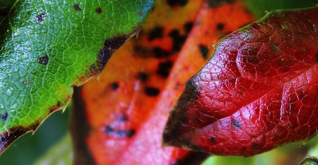 Physiologie d'une feuille. © TanteTati, Pixabay, DP