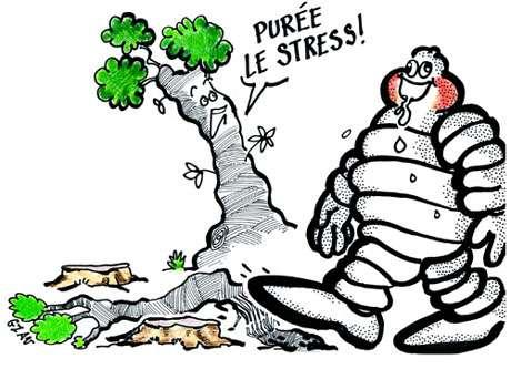Mystère de la nécrose de l'hévéa : quand le stress affecte les arbres