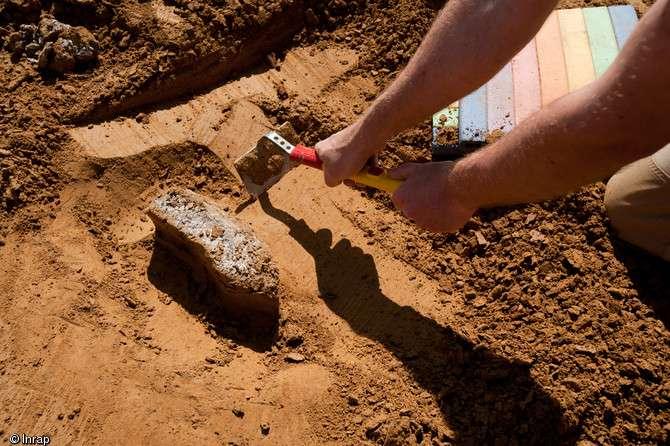 Dent de mammouth du Paléolithique