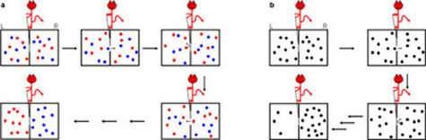 En a le démon de Maxwell sépare deux types de molécules initialement mélangées, en b il rassemble les molécules dans une partie de la boite