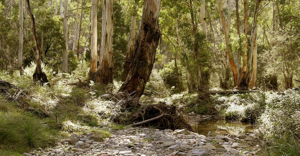 Le bush australien. © Fir0002, GFDL