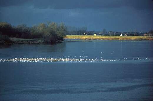 Préserver le bassin de la Loire, la biodiversité et la ressource en eau © C.& B. Desjeux