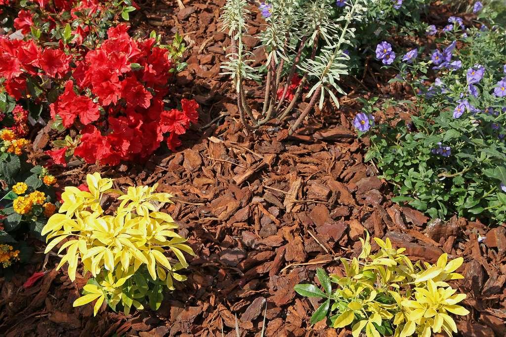 Le paillage empêche la prolifération des mauvaises herbes. © hcast, Adobe Stock