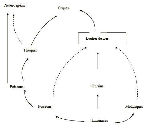 Fig.1. La loutre de mer au cœur du réseau alimentaire auquel elle appartient. © DR