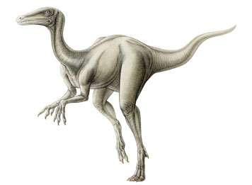 Une reconstitution d'artiste de l'aspect probable de Eoraptor lunensis découvert dans la Vallée de la Lune. Crédit : Institut royal des sciences naturelles de Belgique
