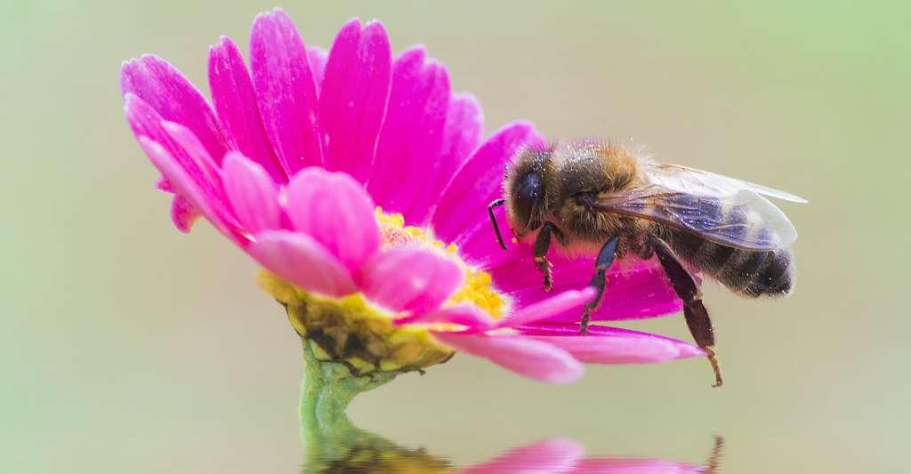 À quoi ressemble la vie des abeilles ? © kesipun, Fotolia