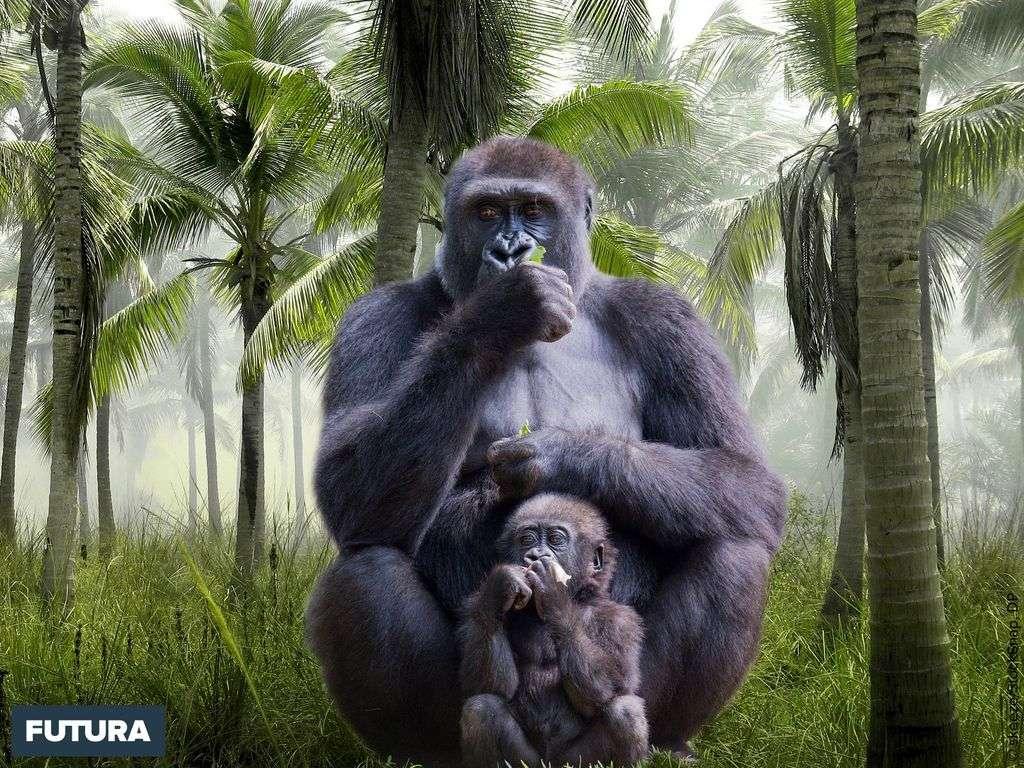 Gorille et son bébé, le plus grand des primates anthropoïdes