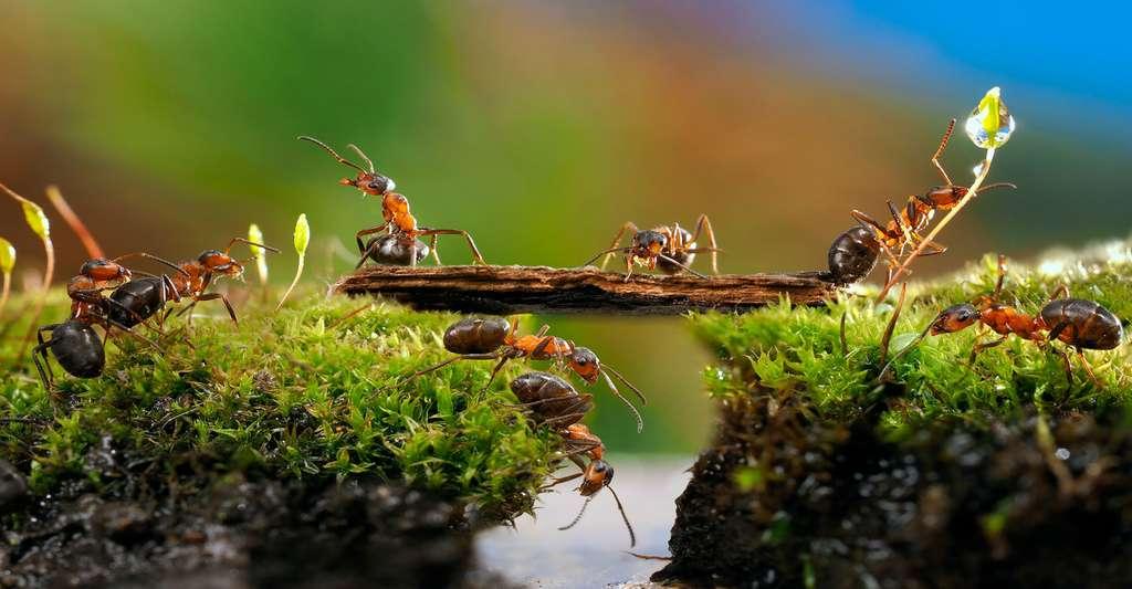 La stratégie des fourmis. © Kozorog - Fotolia