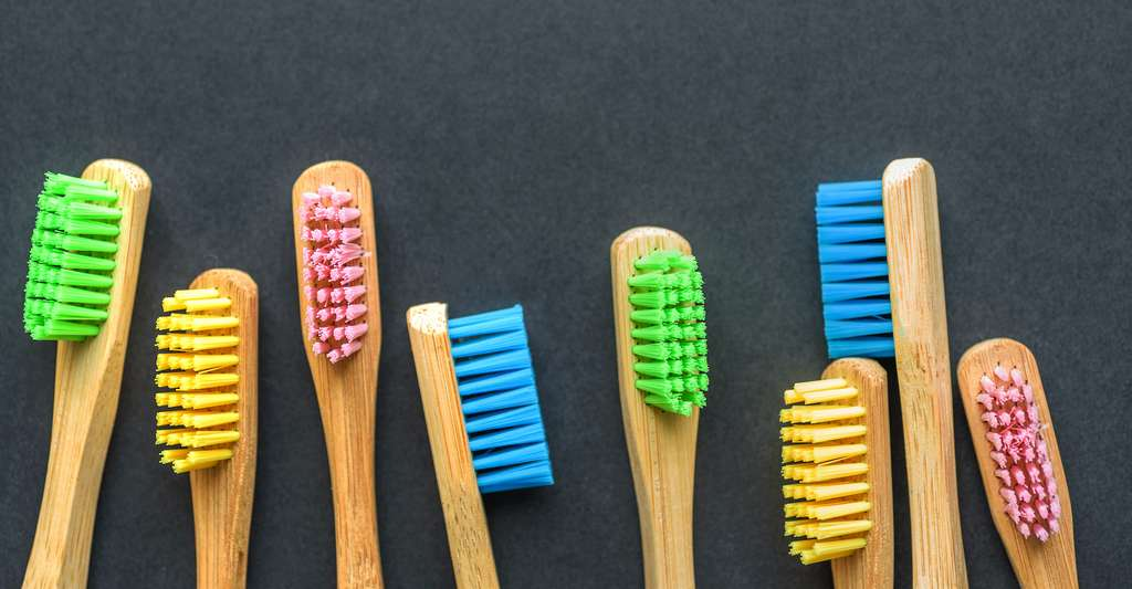 Lorsqu'il est question de brosse à dents, il ne faut pas seulement s'intéresser au matériau qui la compose, mais aussi aux peintures et autres traitements qui peuvent la recouvrir. Et à ses poils dont la fabrication requiert parfois le recours à des produits chimiques néfastes pour l'environnement. Même si la brosse en elle-même est faite de matériaux biodégradables. © Jevanto Productions, Adobe Stock