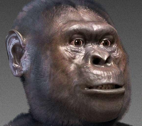 Le visage reconstitué numériquement d'un Astralopithecus afarensis, l'espèce à laquelle appartenait Lucy. © Cicero Moraes, CC by-sa 3.0