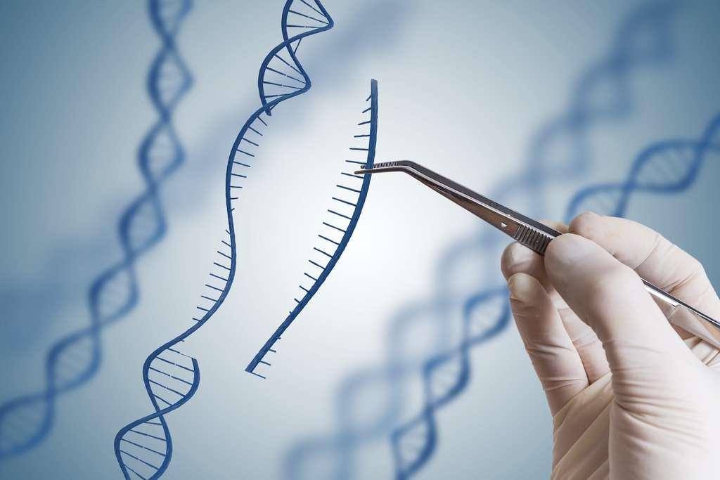 CRISPR-Cas9 : un puissant outil d'édition génétique, mais difficile à manier avec précision. © vchalup, Adobe Stock