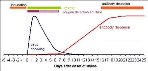 Anticorps sériques dirigés contre le virus influenza. © Marion Zambon, Health Protection Agency, reproduction et utilisation interdites