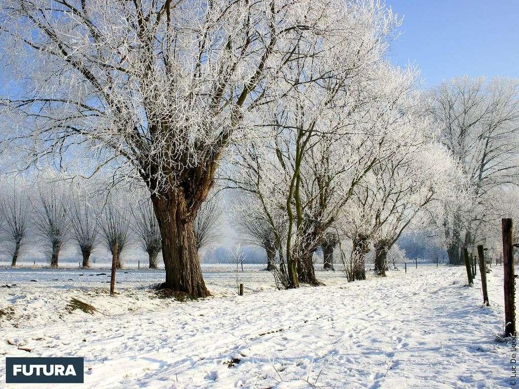 C'est bientôt l'hiver
