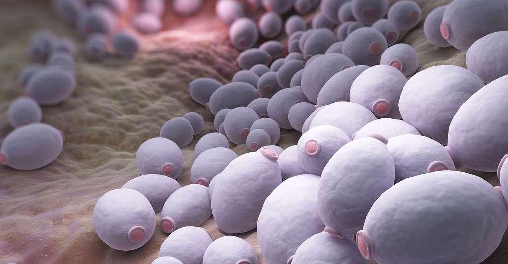 Candida albicans bacteria. © Tatiana Shepeleva, Fotolia