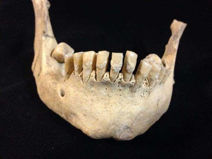 Un des fossiles utilisés pour la découverte. © Dr Sophy Charlton, University of York