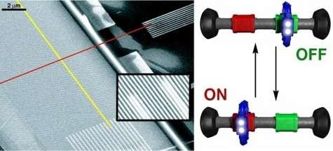 Deux faisceaux de fibres minuscule se croisent. A chacune de leur intersection se trouvent environ deux cents molécules pouvant exister sous deux états, passant de l'un à l'autre sous une certaine différence de potentiel (à gauche, vue éclatée du circuit). Ces molécules, appelées rotaxanes (à droite, très schématiquement), comportent un élément légèrement mobile (en bleu), pouvant s'installer sur deux sites (rouge et vert). Crédit : J. Fraser Stoddart Supramolecular Chemistry Group, UCLA