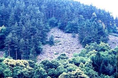 Clairière au milieu de la forêt, chirat à gros blocs en pente forte. Ce chirat est le plus bas en altitude,( 800m)
