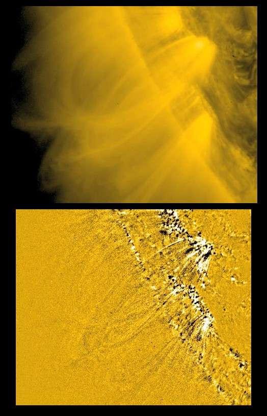 Les spicules vues par SDO. Elles pourraient servir à transporter le plasma solaire dans la couronne. © Nasa