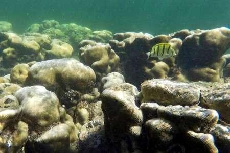 « Une respiration sur deux provient d'oxygène produit par l'océan ». © Tony Karumba, AFP, Archives