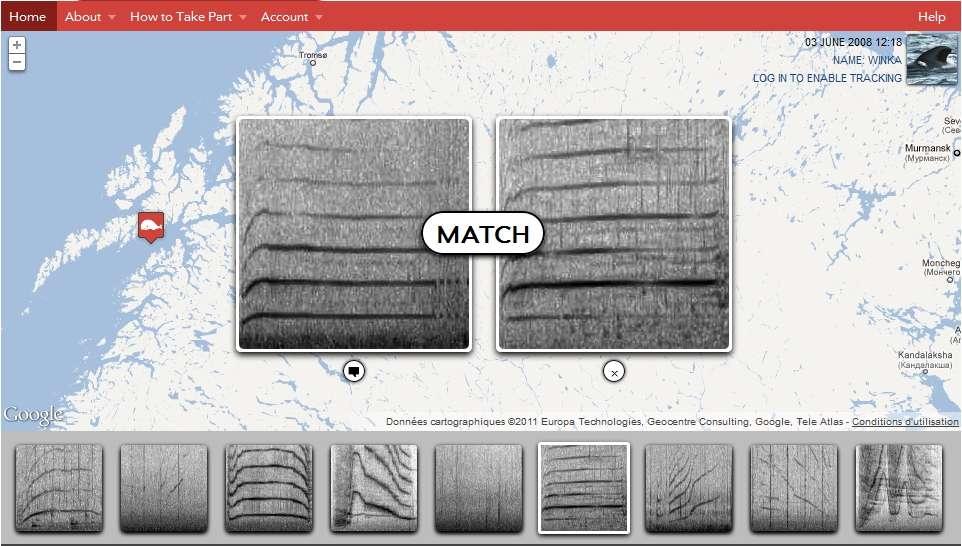 Le Whale project propose aux internautes de rassembler les sons de cétacés qui se ressemblent. © http://whale.fm