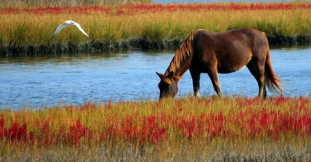 Les chevaux du marais poitevin. © JamesDeMers, Pixabay, DP