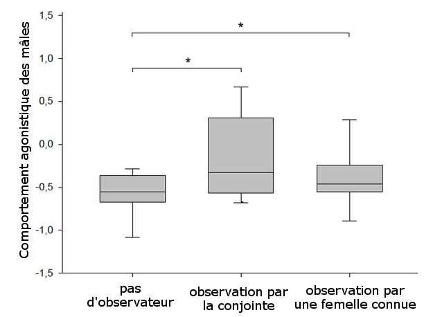 Les mâles canaris ont un comportement plus agressif quand une femelle les observe (l'axe des ordonnées est un indice qui prend en compte différents comportements d'agressivité). © Ung et al., 2011 - adaptation Futura-Sciences