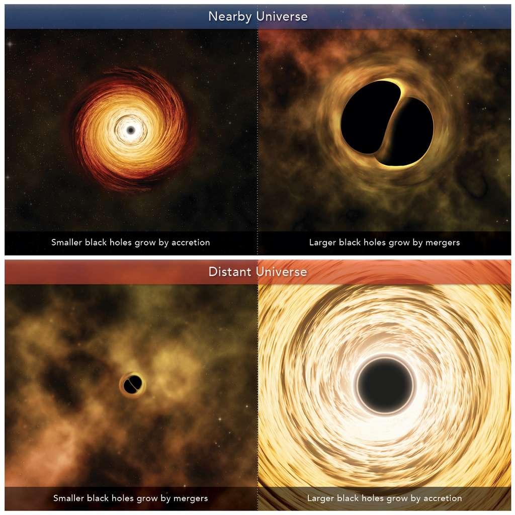 Dans notre voisinage (nearby Universe), les petits trous noirs se développent par accrétion (à gauche) et les plus gros, par fusion (à droite). Dans l'Univers lointain (distant Universe), c'est l'inverse. © M. Weiss, Université de Harvard