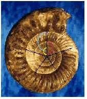 Ce fossile présente une suite géométrique de Fibonacci. © DR