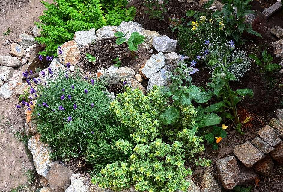 Herbes aromatiques cultivées en permaculture. © Terezqua, Fotolia