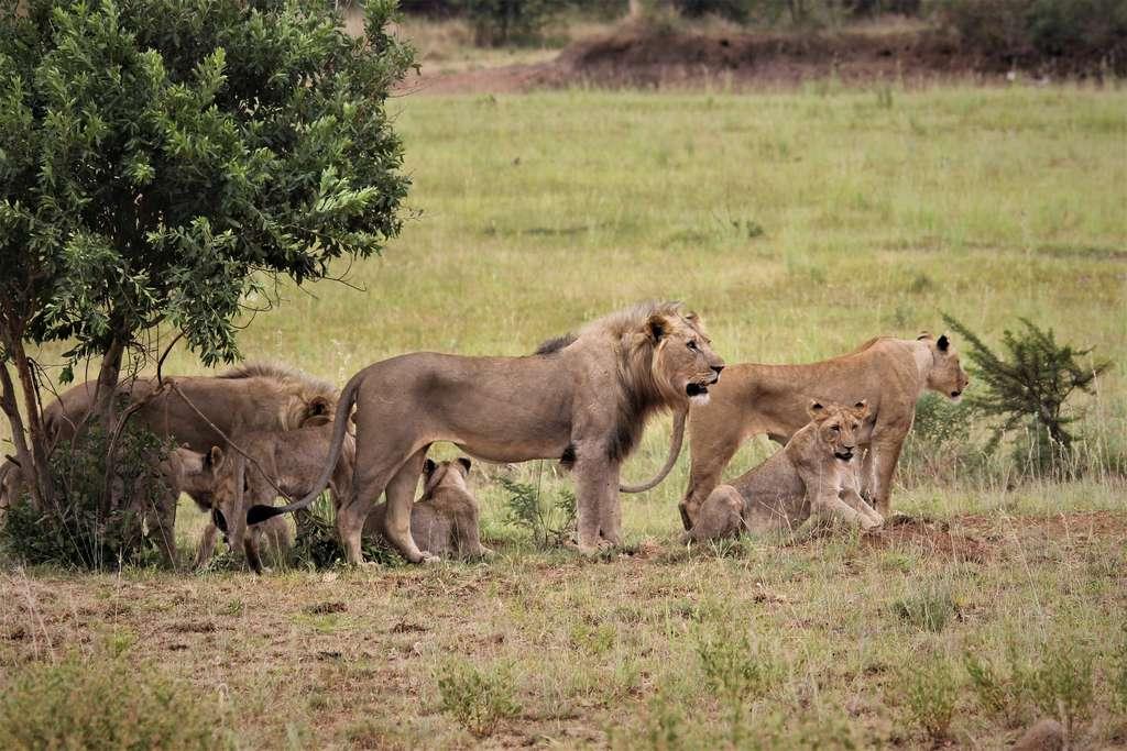 Le stress animal lors de la période de chasse. © Nel Botha-NZ, Pixabay, DP