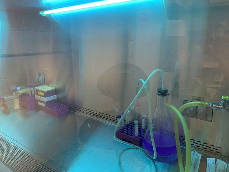 美国宾夕法尼亚州立大学的其他研究人员也在测试消除冠状病毒所必需的暴露于紫外线(UV)的水平和时间。为表面消毒设备选择最实用的解决方案。玛丽·鲍德温学院©Alyssa Lagrange