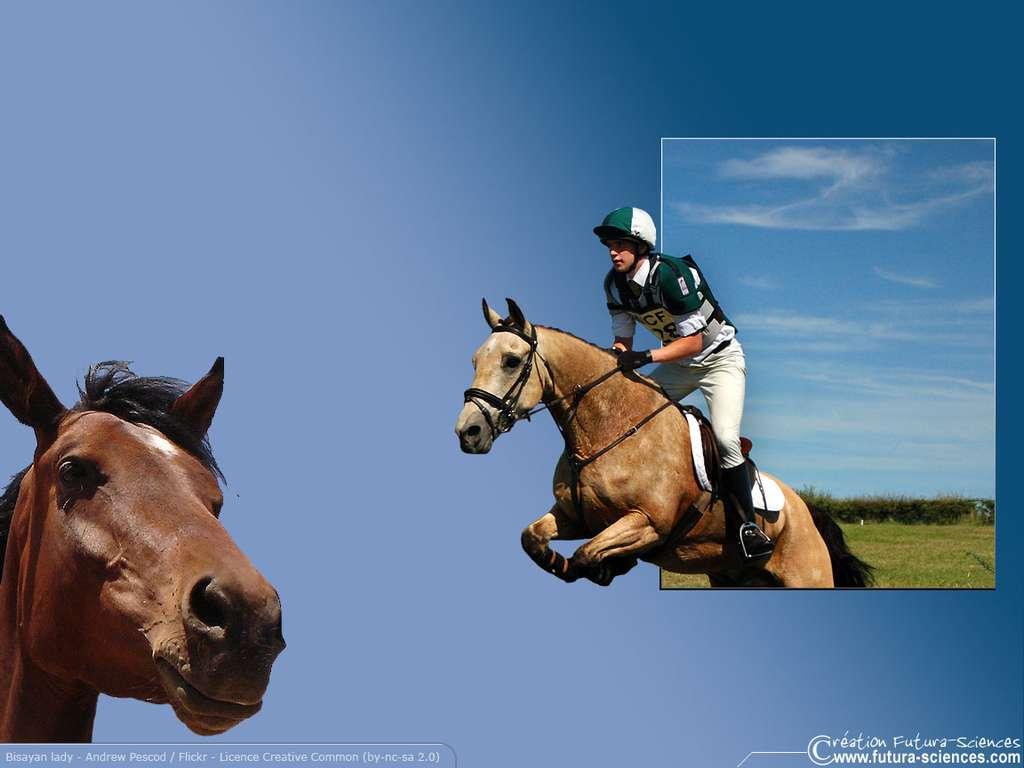 Equitation saut d'obstacle