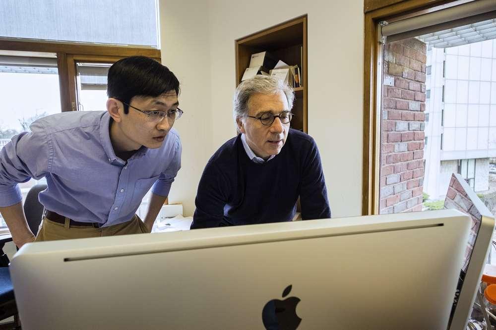 Peng Yi (à gauche) et Doug Melton (à droite) travaillent sur ce projet depuis plusieurs années, mais c'est en 2011 que leurs recherches sur le diabète ont pris un nouveau tournant, quand ils ont pu constater les effets de la bêtatrophine sur la synthèse des cellules bêta pancréatiques. © B. D. Colen, université Harvard
