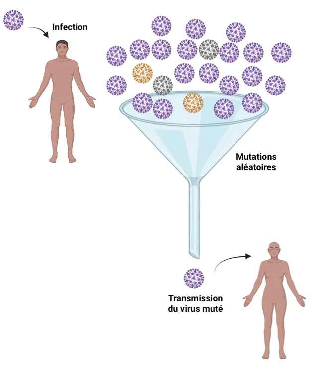 Un variant émerge lorsqu'un virus muté est transmis à une autre personne. © Vaughn Cooper via Biorender
