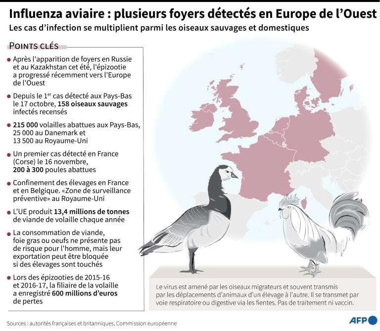 Influenza aviaire : plusieurs foyers détectés en Europe de l'Ouest. © Kun Tian, AFP, Archives
