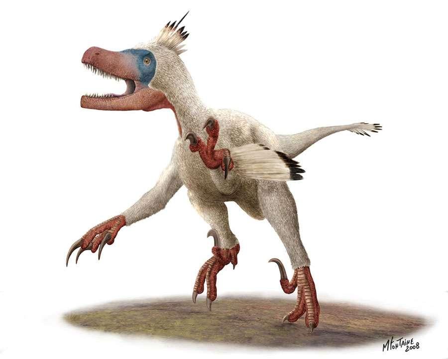 Variraptor en couleurs