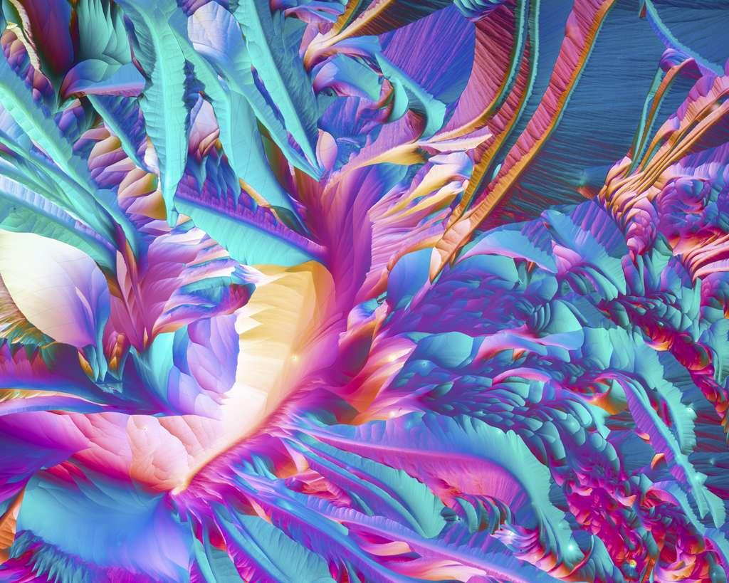 Les acides aminés L-glutamine et bêta-alanine vus au microscope. © Justin Zoll (États-Unis), Olympus