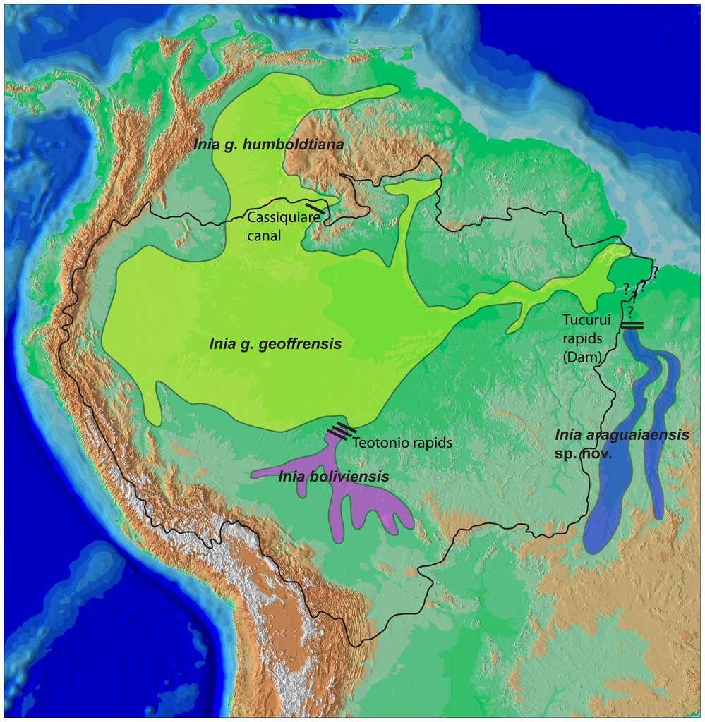 La répartition du dauphin nouvellement identifié, Inia araguaiaensis, et de ses cousins I. geoffrensis et I. boliviensis. Les vallées se rejoignent par endroits mais des rapides, infranchissables pour les dauphins, séparent les populations, qui évoluent séparément depuis deux millions d'années. © Tomas Hrbek et al.
