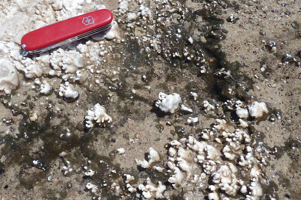 Les formes et les tailles des nodules de silice produits par des micro-organismes visibles sur cette photo prise au bord des sources chaudes d'El Tatio, au Chili, sont très similaires à celles des nodules de silice découverts par Spirit sur Mars. © Steve Ruff