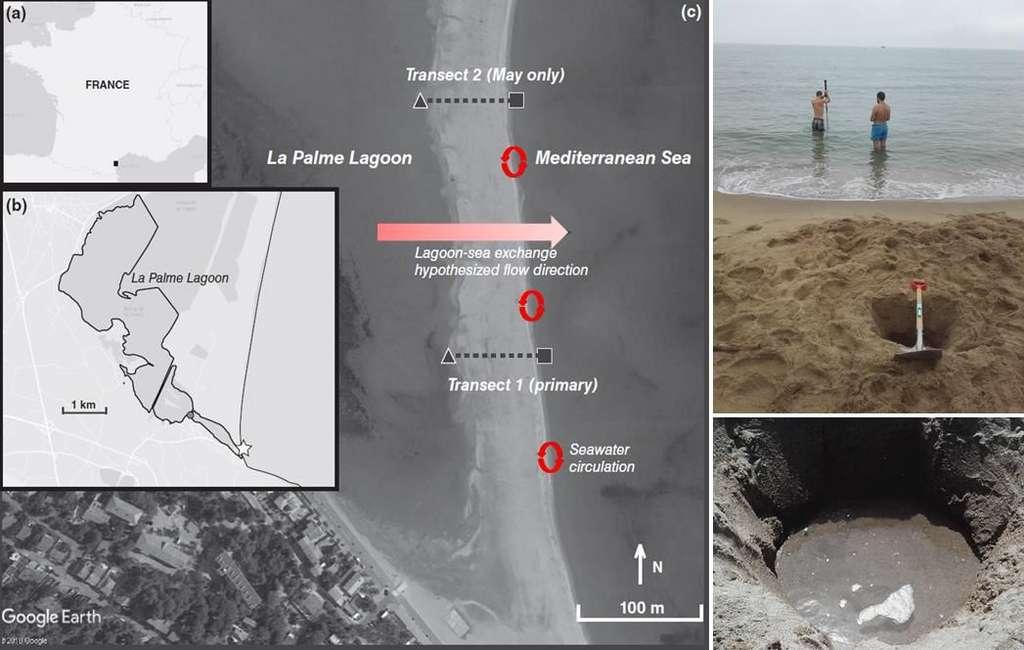 Les 2 types de circulations souterraines étudiés au niveau du lido séparant la lagune de La Palme du domaine marin : au travers du lido (flèche horizontale) et au travers du sédiment perméable sous l'action des vagues (flèches circulaires). © Pieter van Beek