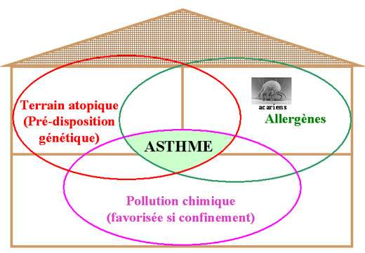 Figure 1 : La pollution chimique à l'intérieur des logements est un co-facteur de l'asthme