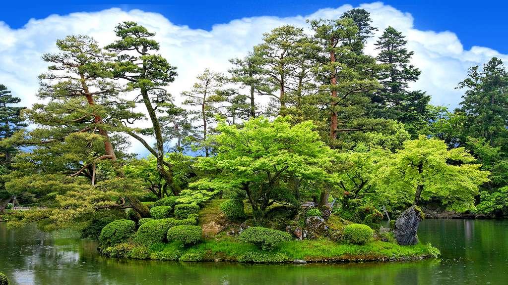 Le jardin japonais où les arbres sont rois