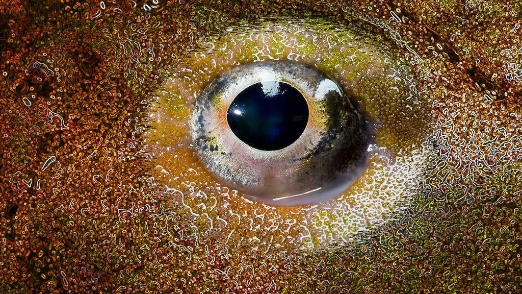 L'œil fixe du poisson