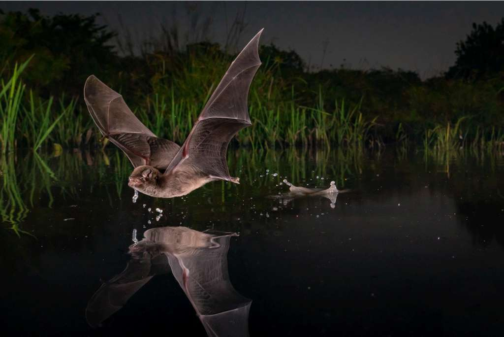 A Sip. © Piotr Naskrecki, BigPicture Natural World Photography Competition
