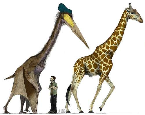 Le ptérosaure Quetzalcoatlus northropi mesurait presque 6 mètres de hauteur lorsqu'il se déplaçait au sol, soit à peu près la taille d'une girafe. © Mark Witton CC by-nc-sa 2.0