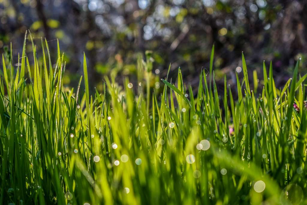 Une pelouse trop humide sera mal coupée et difficile à ramasser. © Zoritsa Valova, Unsplash